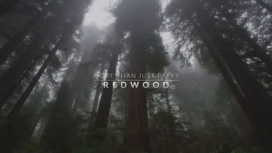 Gorgeous Short Film 'Among the Redwoods' (Video)
