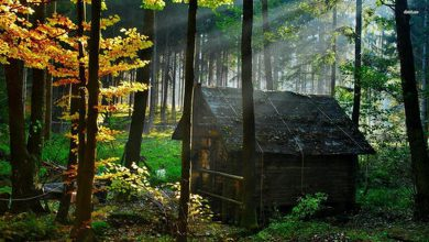 Photo of A Little Cabin in the Woods is All We Need (28 Photos)