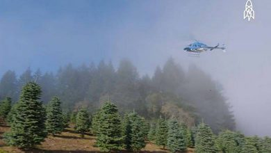 Harvesting a Million Christmas Trees With a Helicopter (Video)
