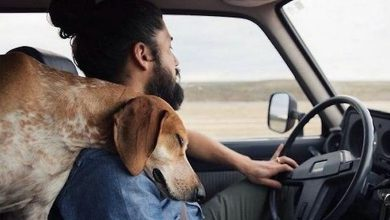 Photo of Every Man Should Have a Dog (28 Photos)