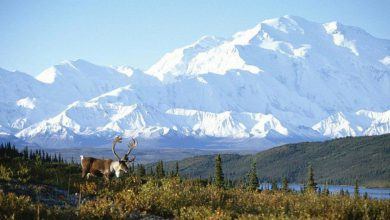 Photo of Post-COVID Travel Bucket List: Denali National Park (18 Photos)