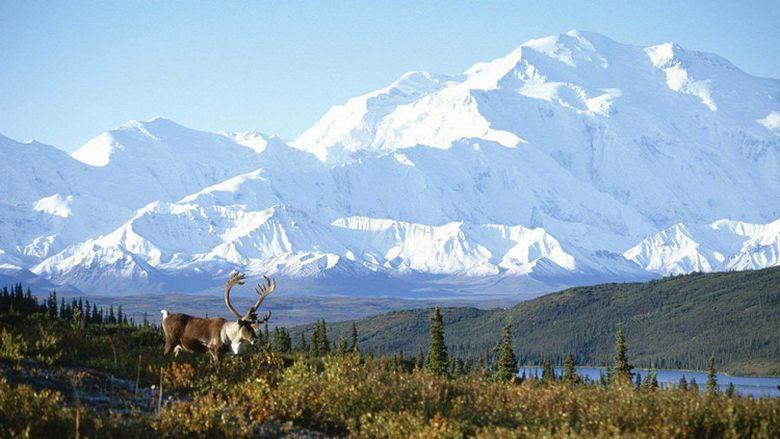 Post-COVID Travel Bucket List: Denali National Park (1)