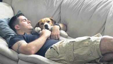 Photo of Every Man Should Have a Dog (41 Photos)