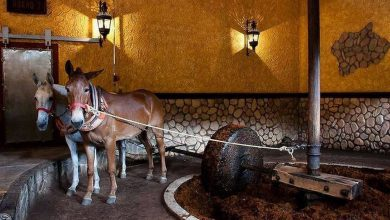 Photo of Mexican Tequila Distilleries Do Things the Old Fashioned Way (16 Photos)