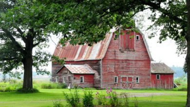 Picturesque Old Weathered Barns (1)