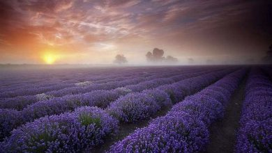 Photo of It's Hard to Believe These 20 Places Are Real